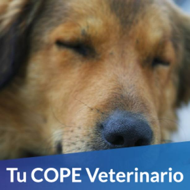 Tu COPE Veterinario