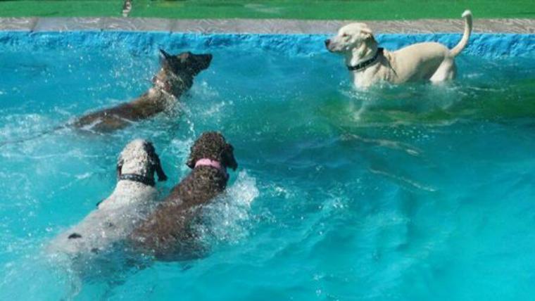 Audio luis morera due o de una piscina para perros en for Piscina islas tres cantos