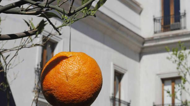 Chile adorna con alambres sus naranjas para recibir a Sánchez y disimular la pobreza