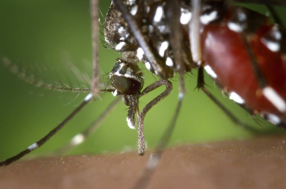 Los médicos piden estar alerta y preparados ante los casos de dengue