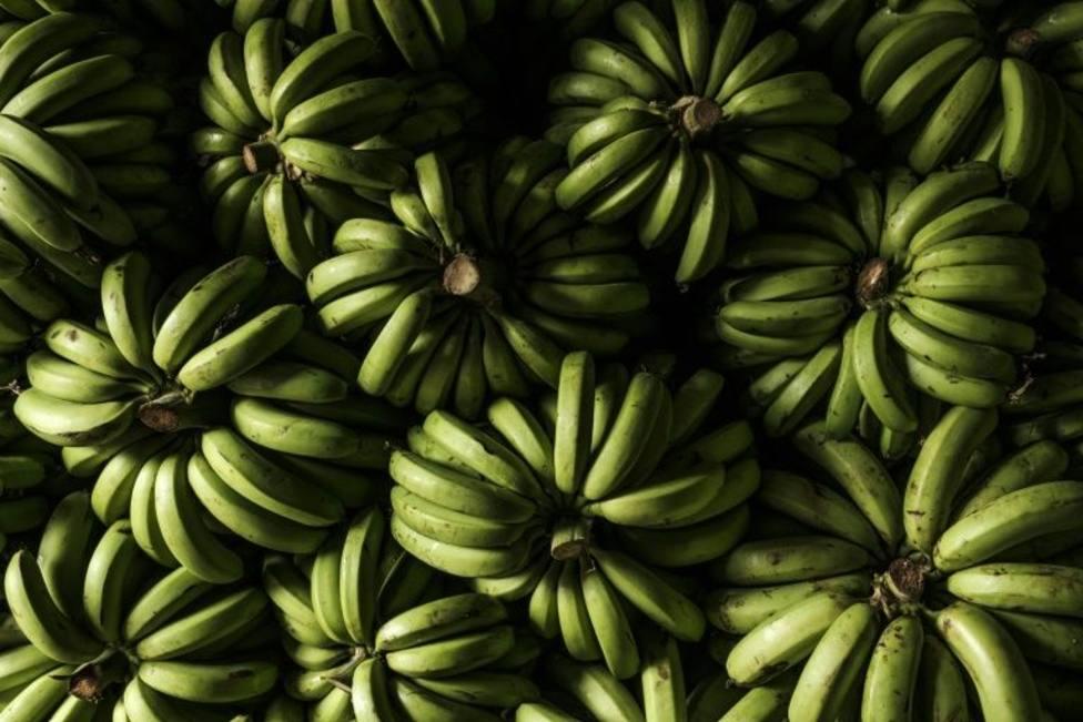 Descubren por casualdiad 75 kilos de cocaína camuflados en un cargamento de plátanos que venía de Ecuador