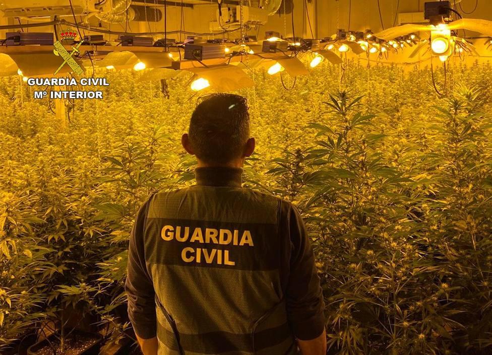La Guardia Civil desmantela en Cartagena dos invernaderos clandestinos de marihuana y detiene a dos personas