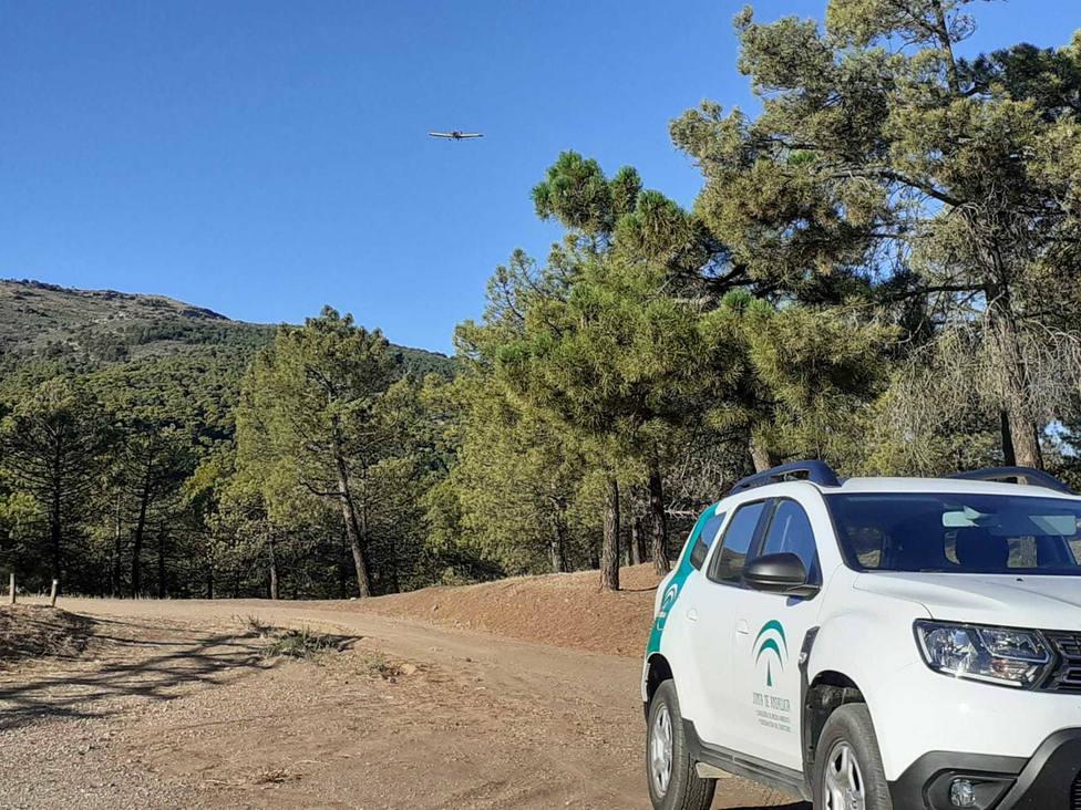 Andalucía atacará a la procesionaria del pino con tratamientos aéreos