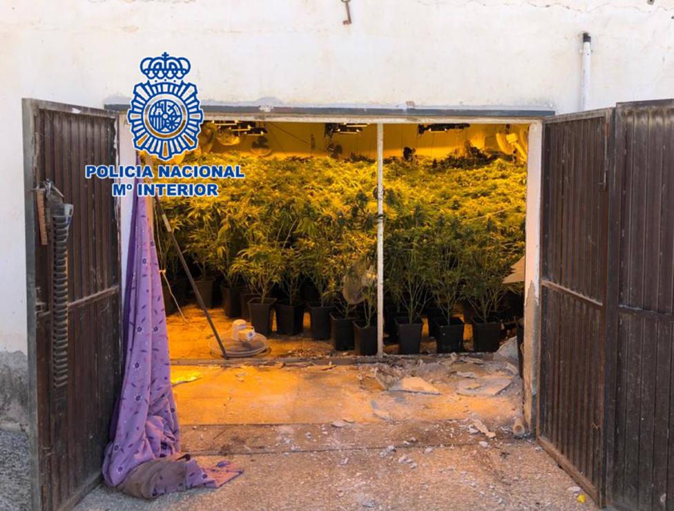 Detienen a dos clanes de la droga en Almería e intervienen 1.324 plantas de marihuana
