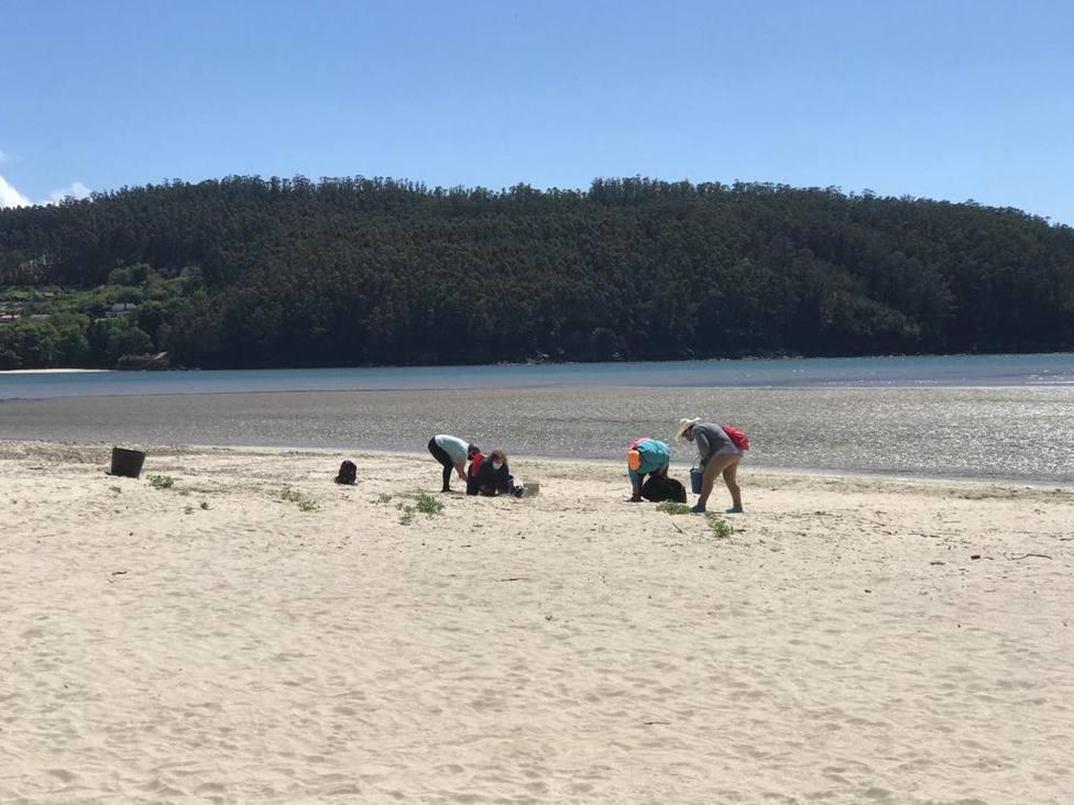 Mariscadoras en la playa de A Magdalena en Cedeira. FOTO: concello Cedeira