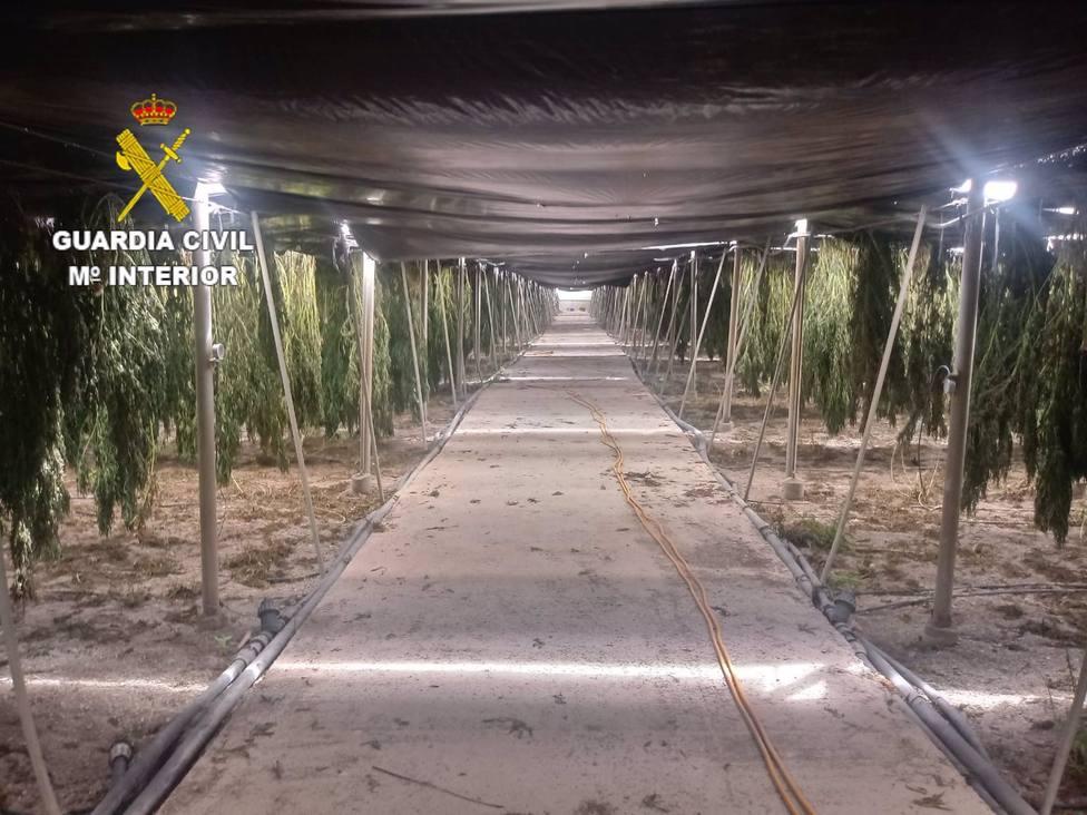 Granada.-Sucesos.-Guardia Civil se incauta de 18.606 plantas de cannabis en dos invernaderos de Sorvilán y Albuñol