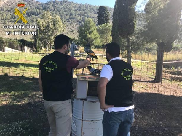 Investigan a tres menores por robar cuatro palomos de competición valorados en 17.000 euros