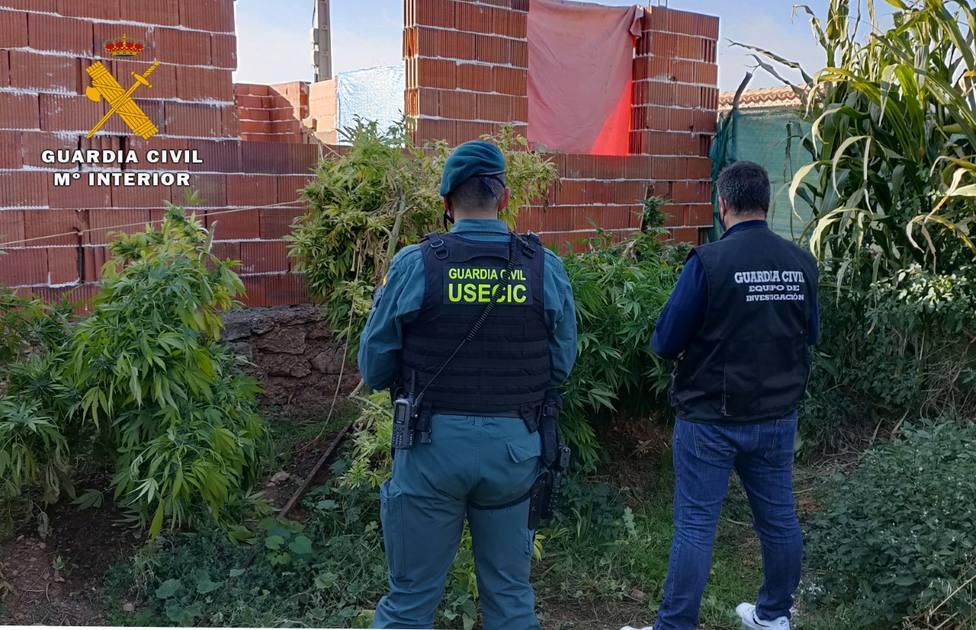 Desmantelado un punto de venta de droga en Ossa de Montiel