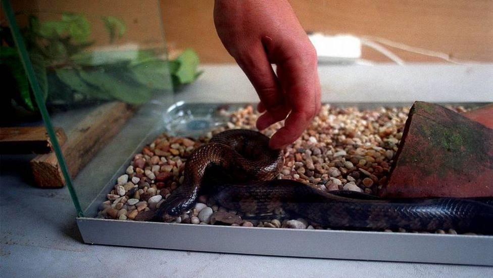 Los cuidados que debes llevar a cabo si tienes una serpiente como mascota para evitar riesgos
