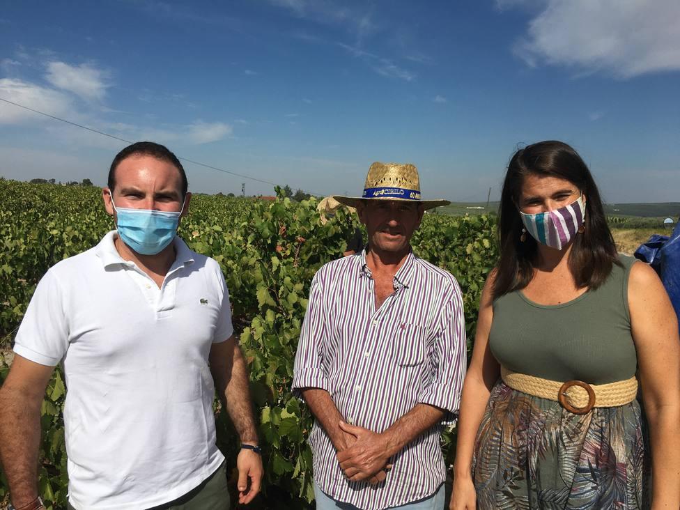 Agricultura destaca el respaldo de la Junta al sector vitivinícola en Córdoba
