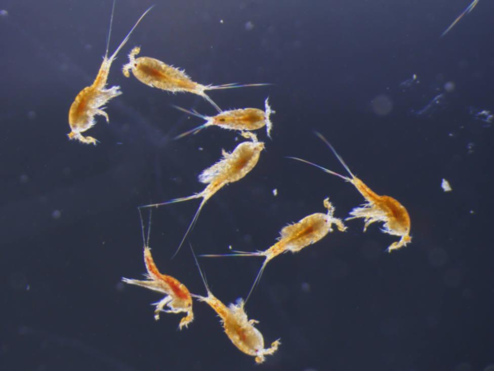 ctv-meb-crustaceos-plancton