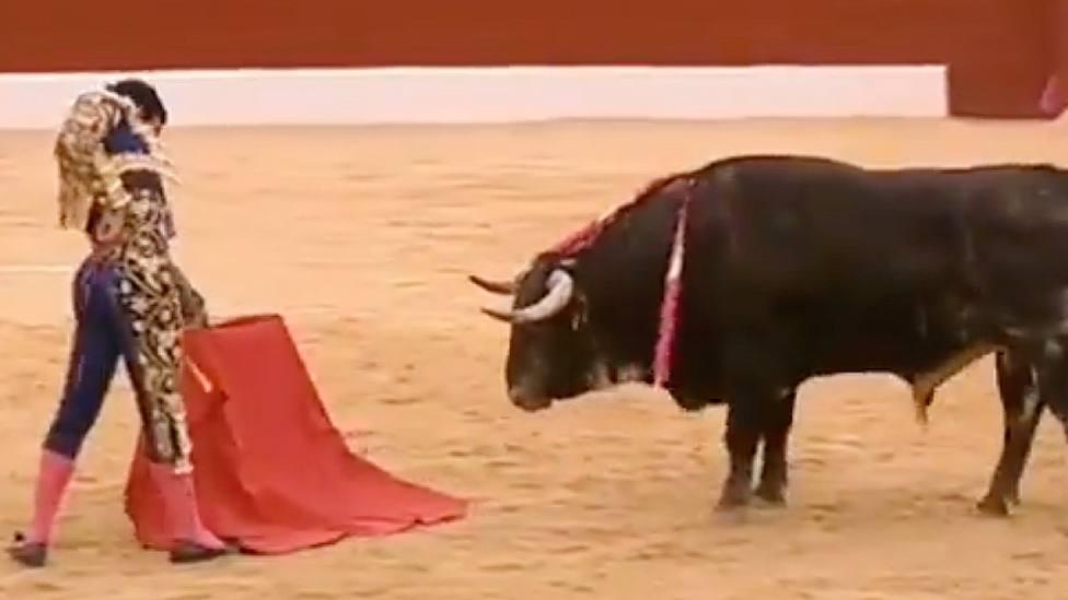 Joaquín Galdós ante Alambrisco, el toro de El Pilar indultado en Tobarra (Albacete)