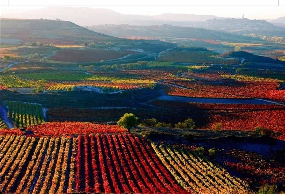 La DOC Rioja aprueba un rendimiento amparado del 95% para la próxima vendimia