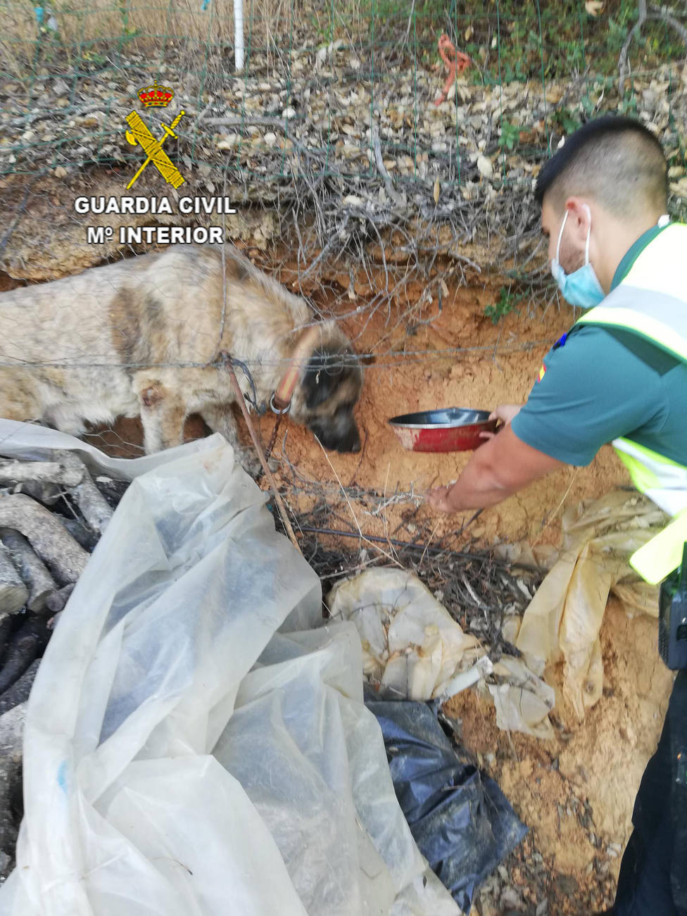 Rescate perro Cañamero. OPC Cáceres
