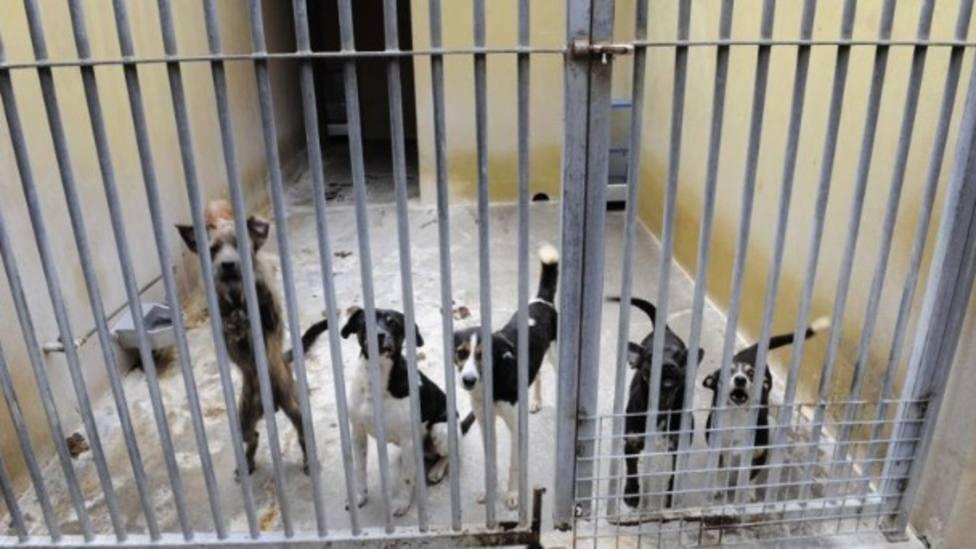 Perros en una protectora de animales