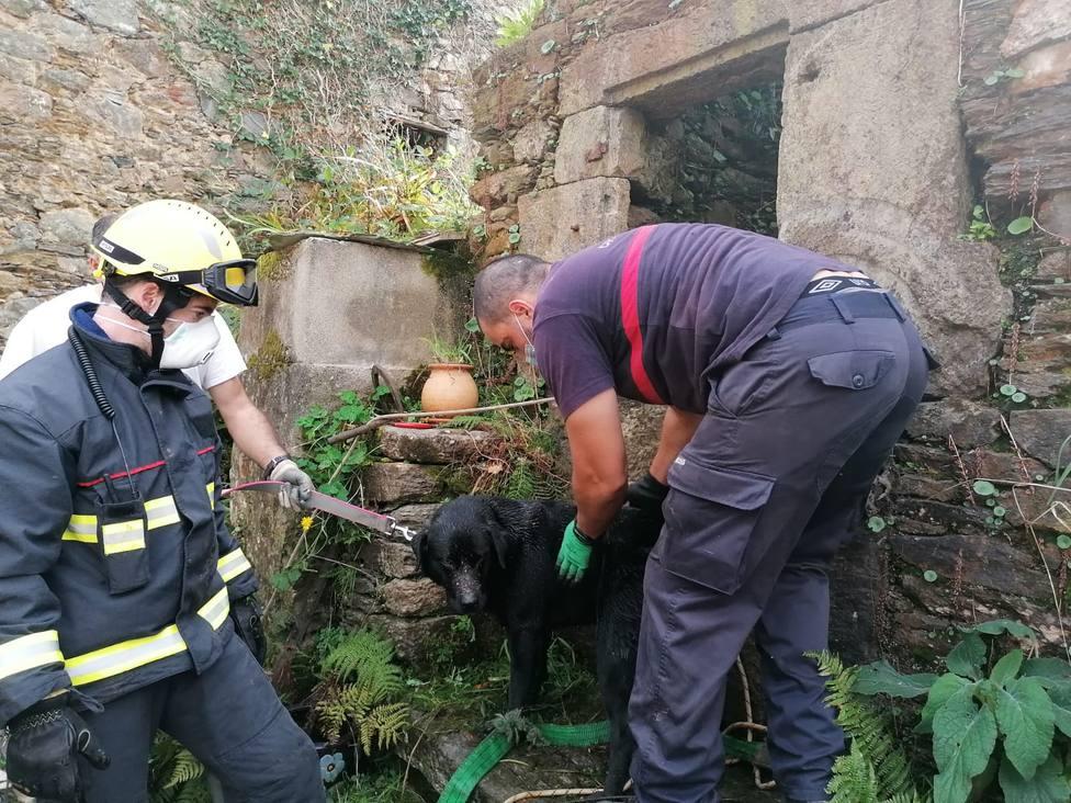 El canino tras ser retirado del interior del pozo - FOTO: Concello de Ortigueira