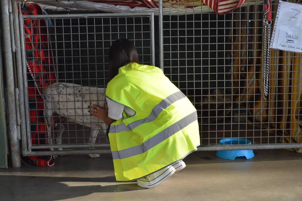 Voluntaria animales