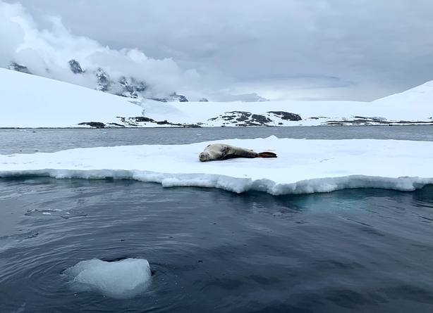 Fotografía fechada este martes 15 de enero de 2019 en la Antártida