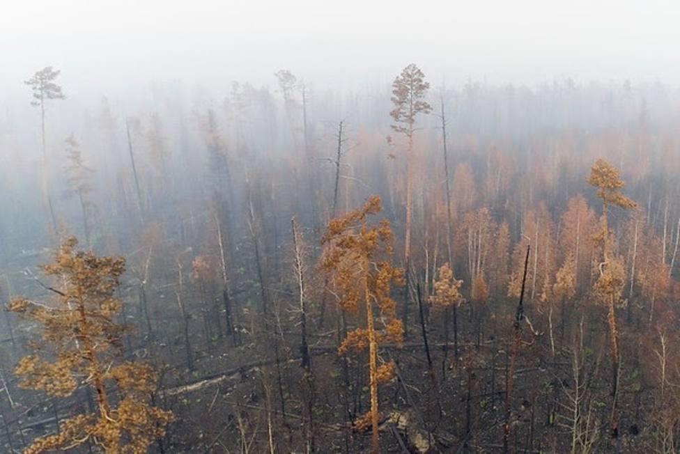 Los incendios en Siberia arrasan 4,3 millones de hectáreas y emiten 166 millones de toneladas de CO2, según Greenpeace