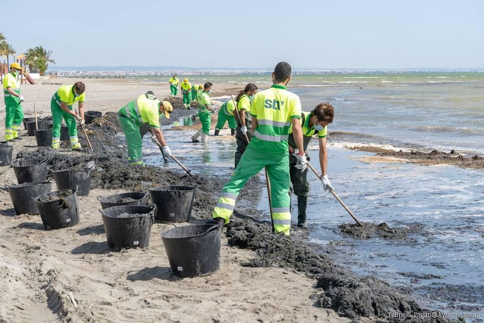 El Ayuntamiento de Cartagena refuerza la limpieza y retirada de algas en el Mar Menor con otros 16 operarios