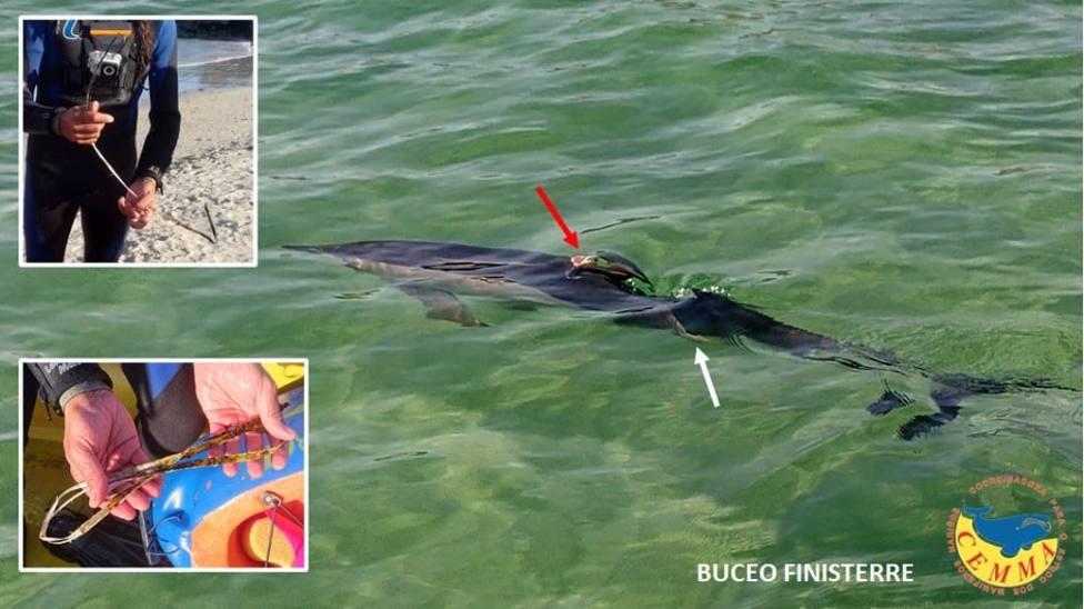 delfin finisterre herido