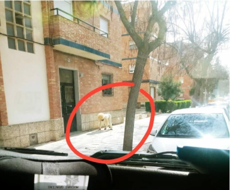 Un varón se disfraza de perro en Toledo para saltarse el confinamiento