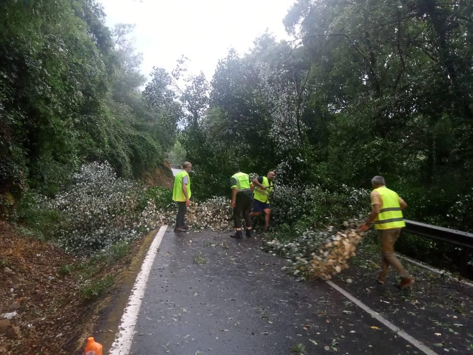 Caída árboles
