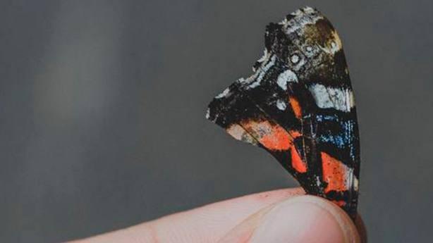 ctv-bxh-mariposa