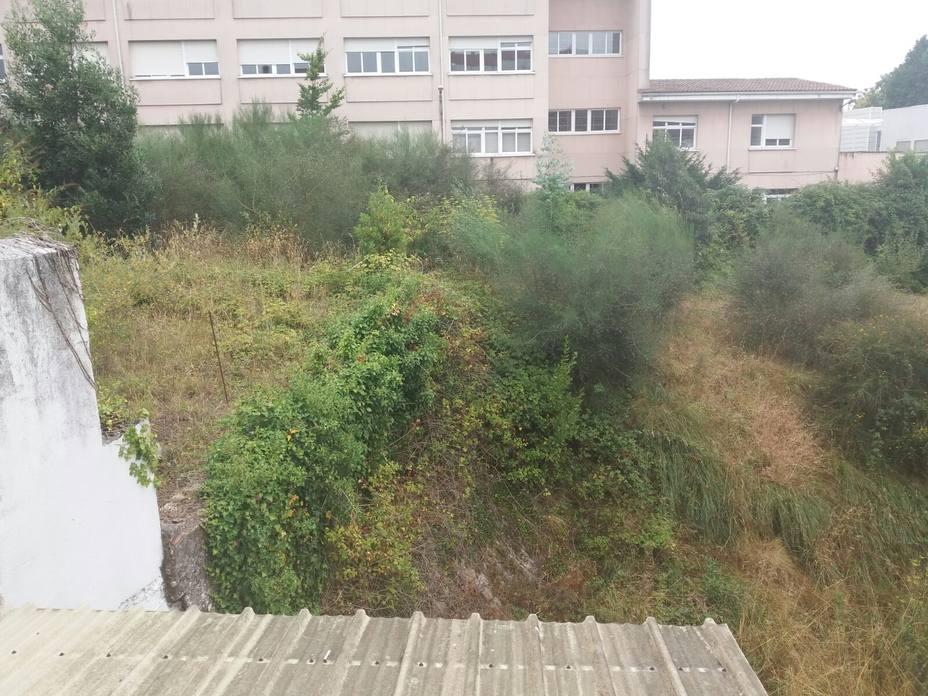 Una selva en pleno barrio de Conxo
