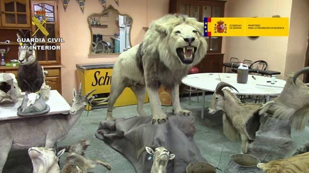 Un león africano, rinoceronte blanco, tigre de bengala, hipopótamo, cocodrilo africano, antílope africano