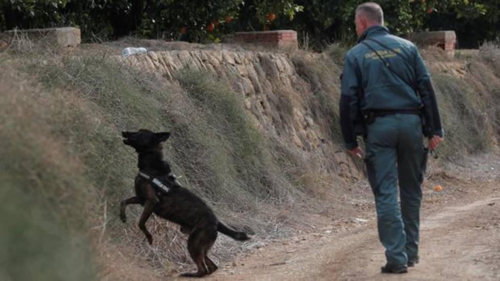 Búsqueda de Marta Calvo con perros adiestrados