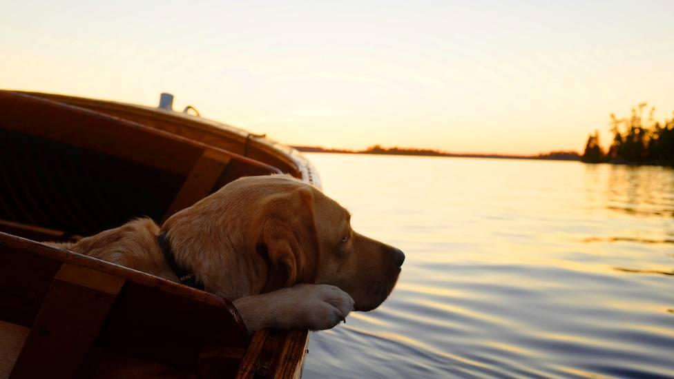 Zarpan en un velero con su perro y lo que les ocurrió cambió sus vidas para siempre