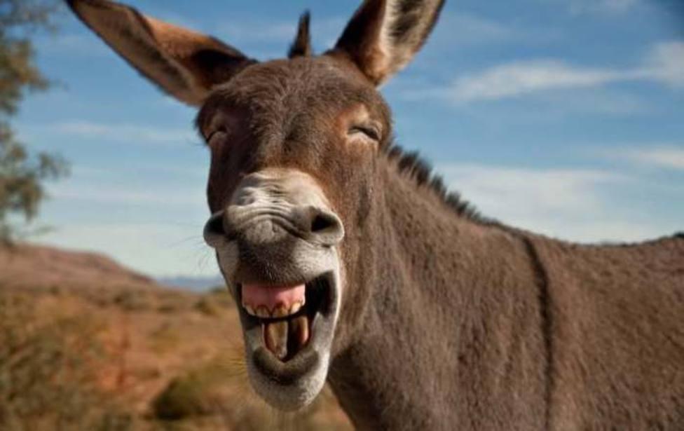 """La sorprendente historia que dio lugar a la expresión popular """"caerse del  burro"""" - Religión - COPE"""