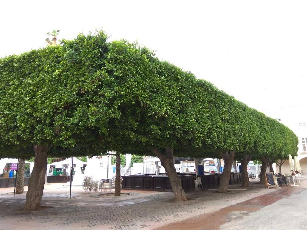 El TSJA paraliza de forma provisional el traslado de los ficus de la Plaza Vieja de Almería
