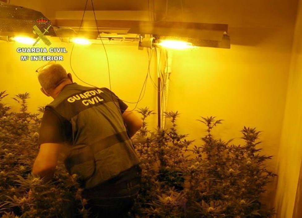 La Guardia Civil desmantela en Librilla un grupo criminal dedicado al cultivo ilícito de marihuana