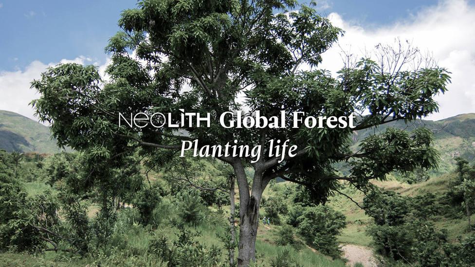 ctv-6fe-banner-neolith-global-forest
