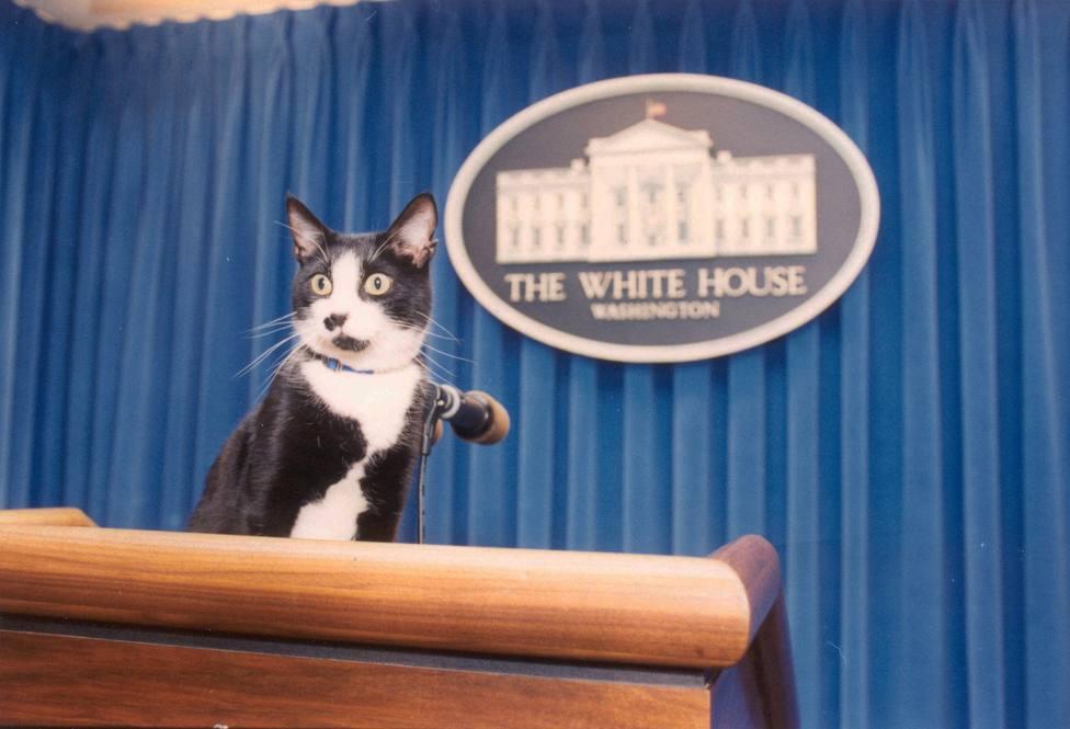 El día del gato: por qué se celebra en febrero y la conexión que tiene con la Casa Blanca