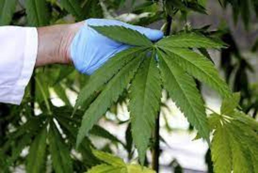 ctv-mi9-marihuana