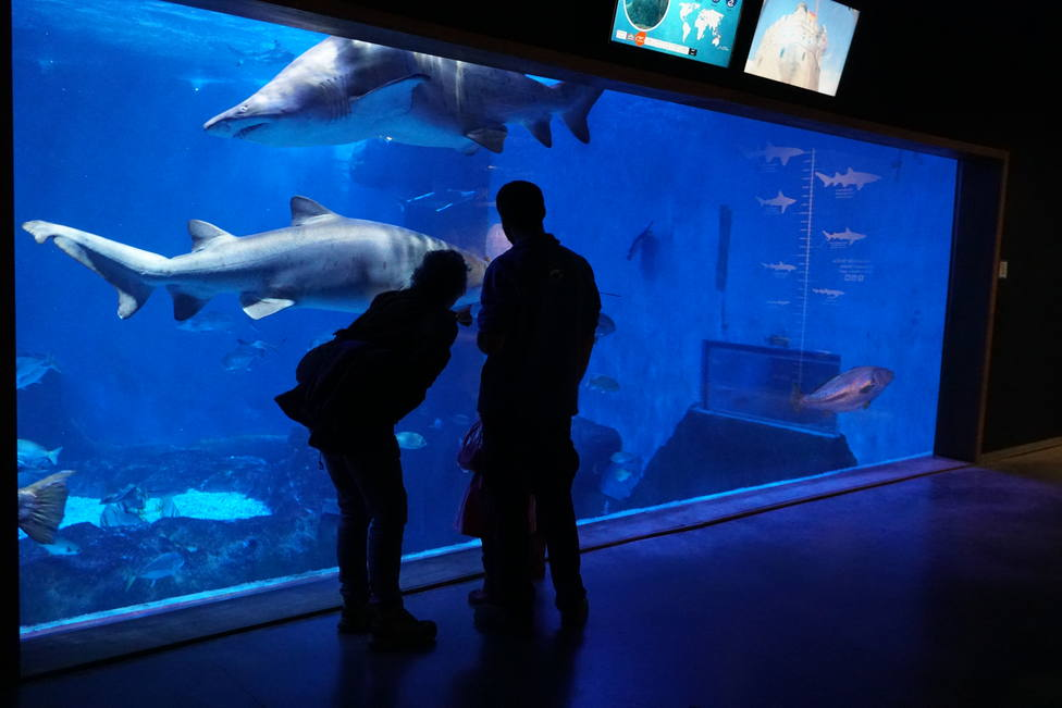 ctv-p2u-as tiburones-a-media-noche