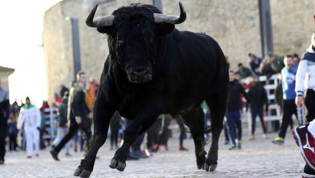 Astado de El Canario que se jugó por las calles de Ciudad Rodrigo el pasado año