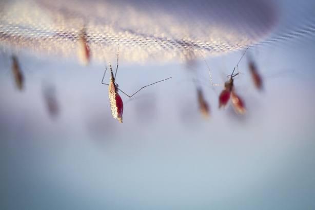 La OMS certifica que Uzbekistán está libre de malaria