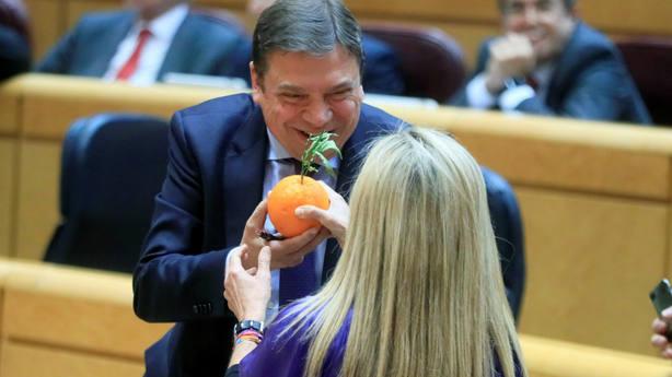 El ministro Luis Planas recibe una naranja de manos de la senadora del PP Marta Torrado