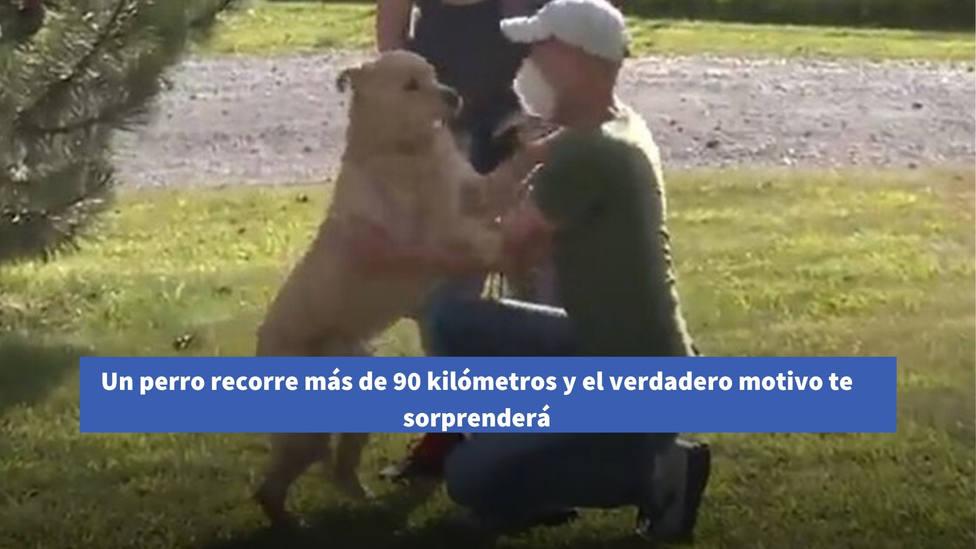 Un perro recorre más de 90 kilómetros y el verdadero motivo te sorprenderá