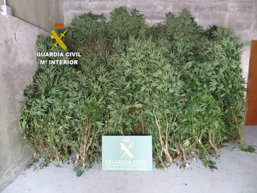 ctv-0jp-marihuana
