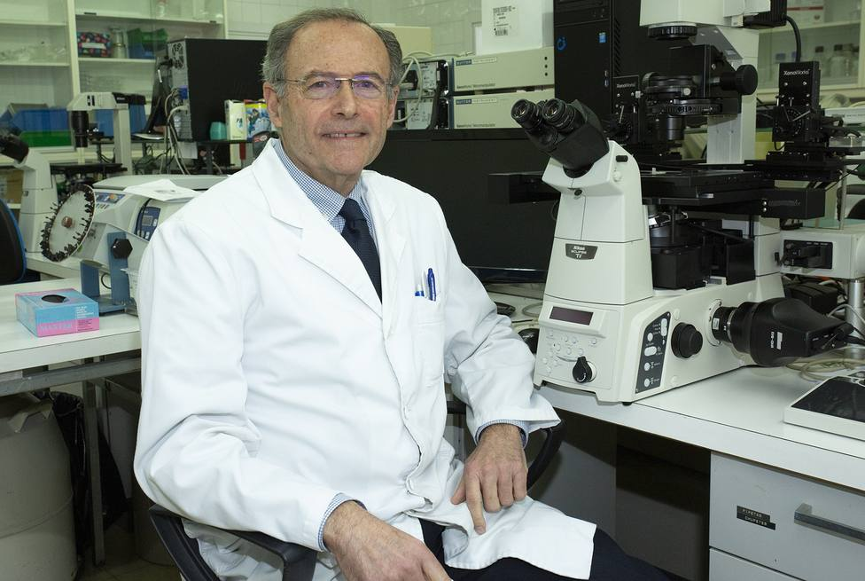 Expertos españoles e italianos hallan la alteración que causa un contaminante en el desarrollo del miocardio embrionario