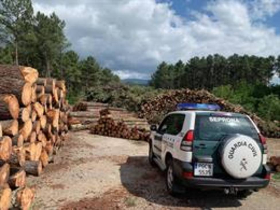 Un empresario de Ourense detenido y 14 personas investigadas por vender madera infectada en Cantabria