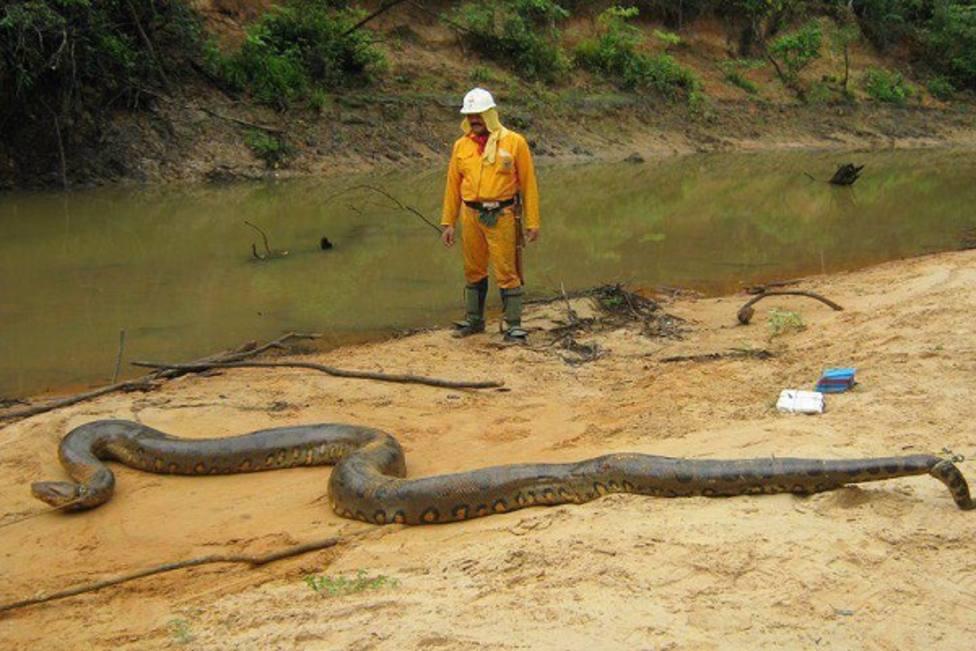 Dos buzos se topan con una anaconda gigante en Brasil y el reptil reacciona de manera sorprendente