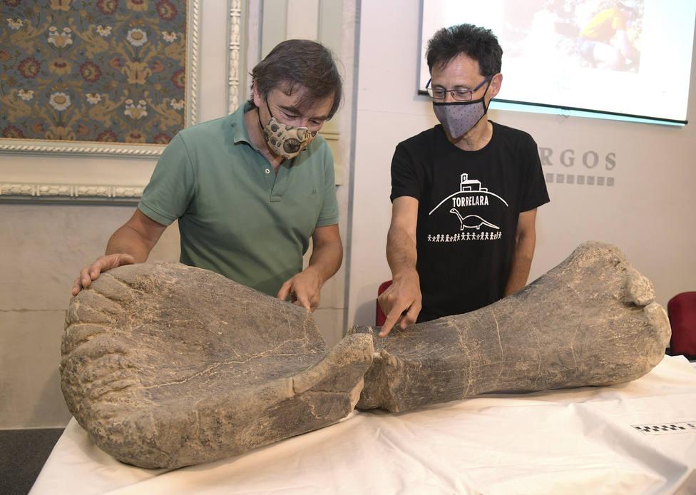 Aparecen fósiles de dinosaurios voladores en los yacimientos de Torrelara (Burgos)