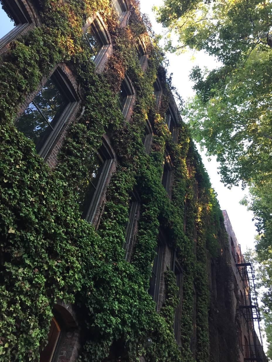 Un proyecto liderado por el Botánico adaptará colegios y centros de servicios sociales al cambio climático