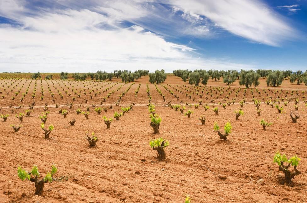 Cultivo en Extremadura. Foto: Juntaex